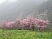 武陵農場--2012櫻來瘋篇:武陵農場2012櫻來瘋篇 057.jpg