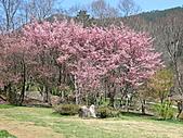 武陵農場--2011櫻花篇:武陵農場--櫻花篇 033.jpg