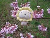 武陵農場--2012櫻來瘋篇:武陵農場2012櫻來瘋篇 069.jpg