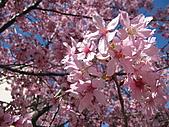 武陵農場--2011櫻花篇:武陵農場--櫻花篇 073.jpg