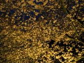 武陵農場--2012櫻來瘋篇:武陵農場2012櫻來瘋篇 128.jpg