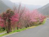 武陵農場--2012櫻來瘋篇:武陵農場2012櫻來瘋篇 048.jpg