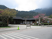 武陵農場--2011櫻花篇:武陵農場--櫻花篇 024.jpg