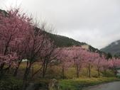武陵農場--2012櫻來瘋篇:武陵農場2012櫻來瘋篇 110.jpg
