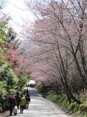 2014武陵櫻花篇:2014 077.jpg