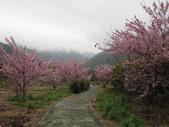 武陵農場--2012櫻來瘋篇:武陵農場2012櫻來瘋篇 049.jpg