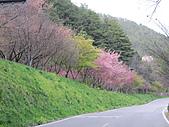 武陵農場--2011櫻花篇:武陵農場--櫻花篇 151.jpg