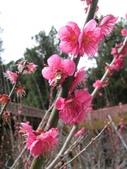 2014武陵櫻花篇:2014 034.jpg