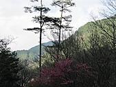 武陵農場--2011櫻花篇:武陵農場--櫻花篇 099.jpg