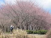 2014武陵櫻花篇:2014 120.jpg