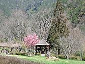 武陵農場--2011櫻花篇:武陵農場--櫻花篇 031.jpg
