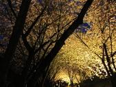 武陵農場--2012櫻來瘋篇:武陵農場2012櫻來瘋篇 131.jpg