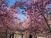 武陵農場--2011櫻花篇:武陵農場--櫻花篇 038.jpg