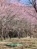 2014武陵櫻花篇:2014 116.jpg