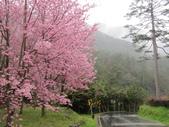 武陵農場--2012櫻來瘋篇:武陵農場2012櫻來瘋篇 073.jpg