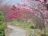 武陵農場--2012櫻來瘋篇:武陵農場2012櫻來瘋篇 052.jpg