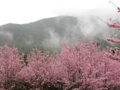 武陵農場--2012櫻來瘋篇:武陵農場2012櫻來瘋篇 074.jpg