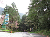武陵農場--2011櫻花篇:武陵農場--櫻花篇 021.jpg