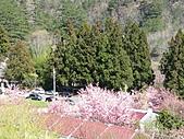 武陵農場--2011櫻花篇:武陵農場--櫻花篇 066.jpg