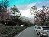武陵農場--2011櫻花篇:武陵農場--櫻花篇 100.jpg