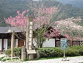 武陵農場--2011櫻花篇:武陵農場--櫻花篇 025.jpg