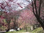 2014武陵櫻花篇:2014 071.jpg