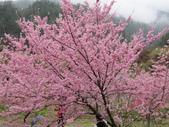 武陵農場--2012櫻來瘋篇:武陵農場2012櫻來瘋篇 053.jpg