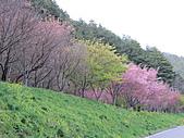 武陵農場--2011櫻花篇:武陵農場--櫻花篇 152.jpg