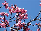 武陵農場--2011櫻花篇:武陵農場--櫻花篇 035.jpg