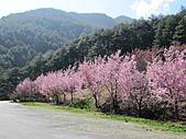 武陵農場--2011櫻花篇:武陵農場--櫻花篇 083.jpg