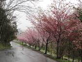 武陵農場--2012櫻來瘋篇:武陵農場2012櫻來瘋篇 075.jpg