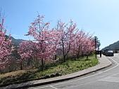武陵農場--2011櫻花篇:武陵農場--櫻花篇 063.jpg