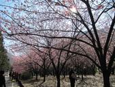 2014武陵櫻花篇:2014 188.jpg