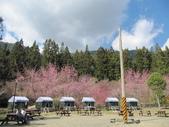 2014武陵櫻花篇:2014 018.jpg