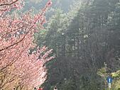 武陵農場--2011櫻花篇:武陵農場--櫻花篇 091.jpg