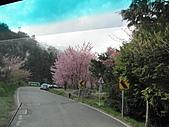武陵農場--2011櫻花篇:武陵農場--櫻花篇 101.jpg