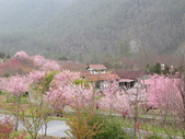 武陵農場--2012櫻來瘋篇:武陵農場2012櫻來瘋篇 054.jpg