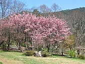 武陵農場--2011櫻花篇:武陵農場--櫻花篇 032.jpg