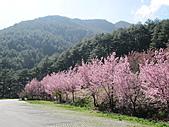 武陵農場--2011櫻花篇:武陵農場--櫻花篇 084.jpg