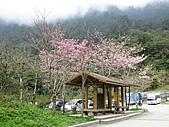 武陵農場--2011櫻花篇:武陵農場--櫻花篇 022.jpg