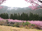 武陵農場--2012櫻來瘋篇:武陵農場2012櫻來瘋篇 106.jpg