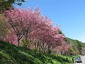 武陵農場--2011櫻花篇:武陵農場--櫻花篇 029.jpg