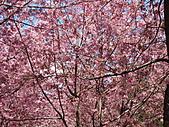 武陵農場--2011櫻花篇:武陵農場--櫻花篇 042.jpg