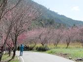 2014武陵櫻花篇:2014 057.jpg