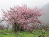武陵農場--2012櫻來瘋篇:武陵農場2012櫻來瘋篇 055.jpg