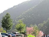 武陵農場--2011櫻花篇:武陵農場--櫻花篇 092.jpg
