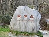 武陵農場--2011櫻花篇:武陵農場--櫻花篇 097.jpg
