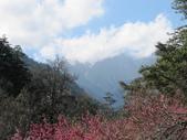 2014武陵櫻花篇:2014 179.jpg