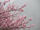 武陵農場--2012櫻來瘋篇:武陵農場2012櫻來瘋篇 056.jpg