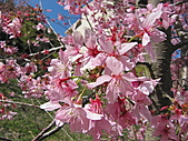 武陵農場--2011櫻花篇:武陵農場--櫻花篇 072.jpg